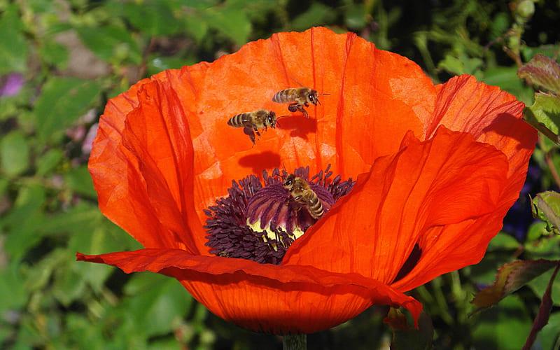 SOS Verein für Bienen