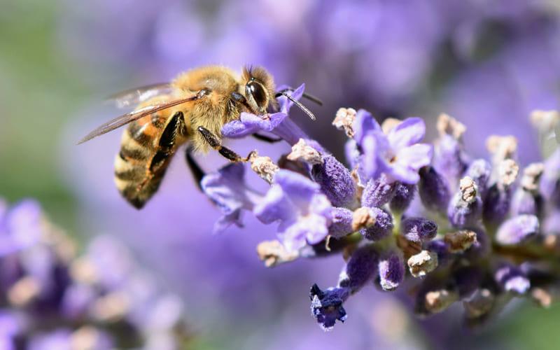 SOS Bienenverein