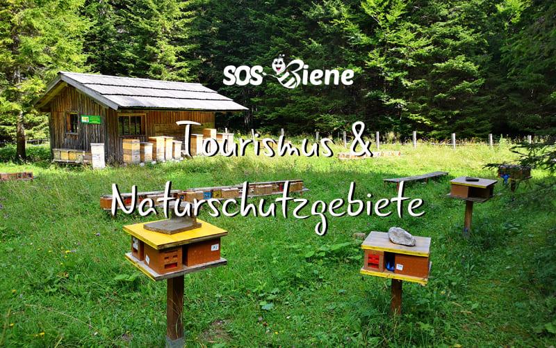Schutz von Wildbienen im Naturschutzgebiet