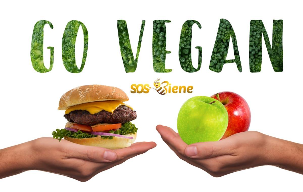 vegane rezepte für anfänger