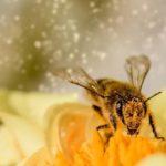 Honig stärkt das Immunsystem