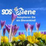 Pflanzen und Nisthilfen schützen Wildbienen