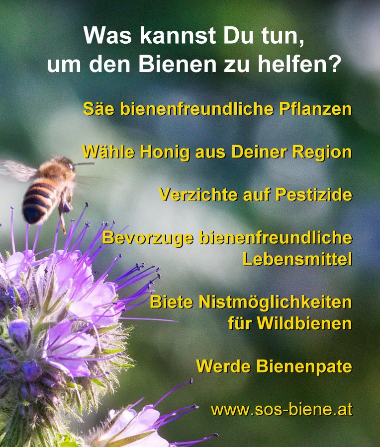 Was kannst Du tun, um den Bienen zu helfen?