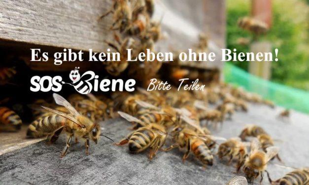 Bienen sind offiziell die wichtigsten Lebewesen auf dem Planeten