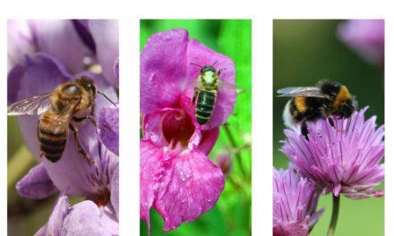 Spenden für SOS Biene | Adoptieren Sie ein Bienenkind!