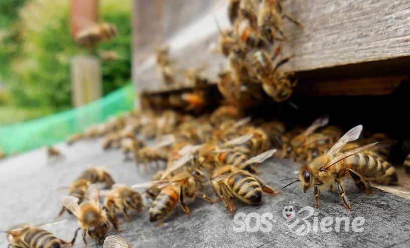 Die Bedeutung der Bienen