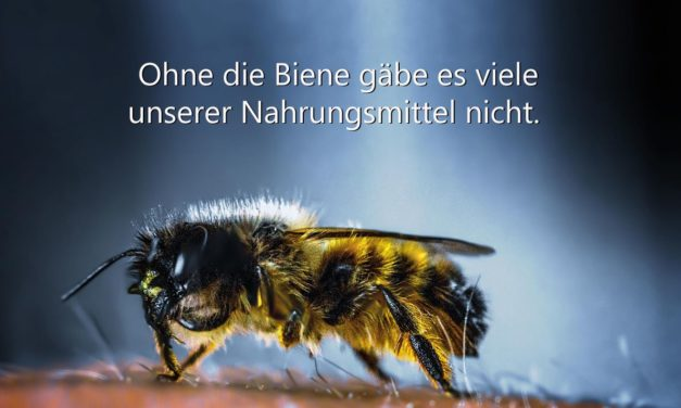 Ohne die Biene gäbe es viele unserer Nahrungsmittel nicht.